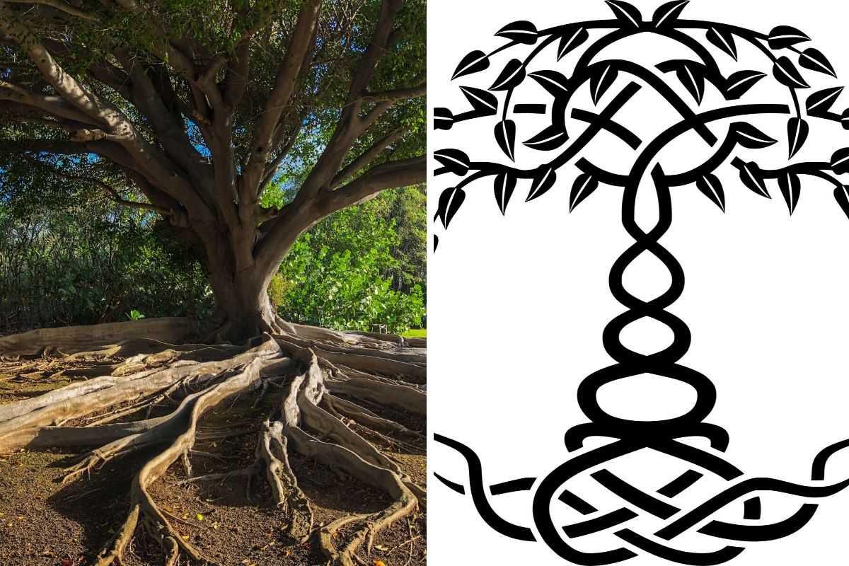 Tree-of-Life-Symbol