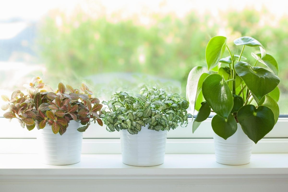 air purified indoor plants