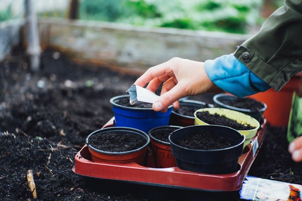 Veggies for Growing in Pots