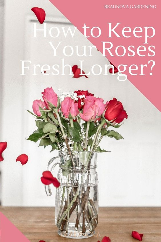 how-to-keep-your-cut-roses-alive-longer