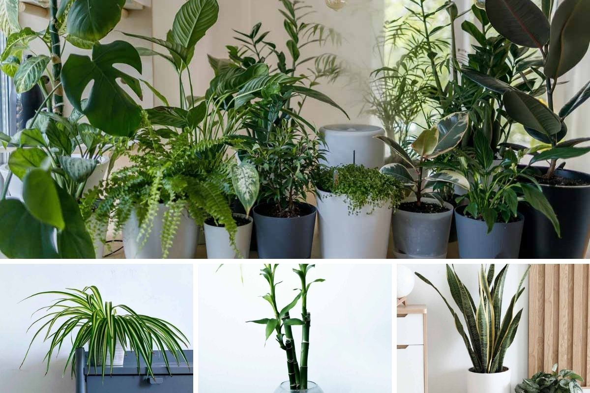 best-10-fortune-feng-shui-plants-at-home